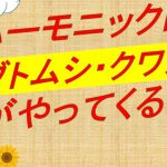 【ハーモニックにカブト虫がやってきた by カブトシラチャ】